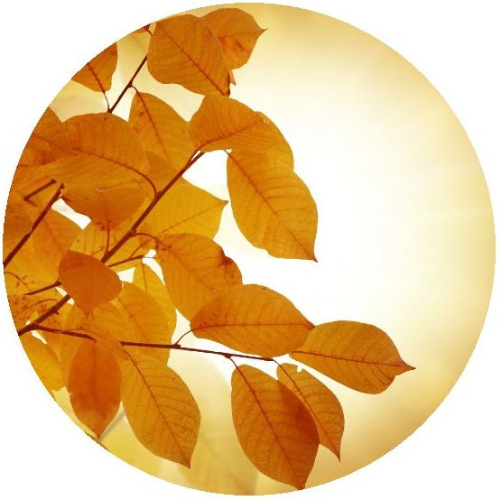 Autumn Leaves Pinback Buttons and Stickers