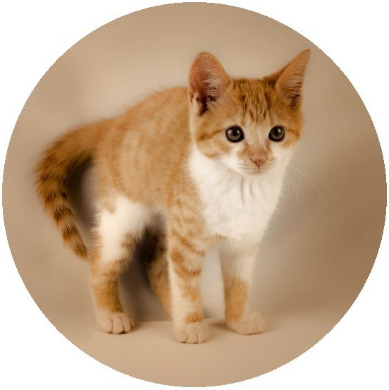 Cat Photo Pinback Buttons and Stickers