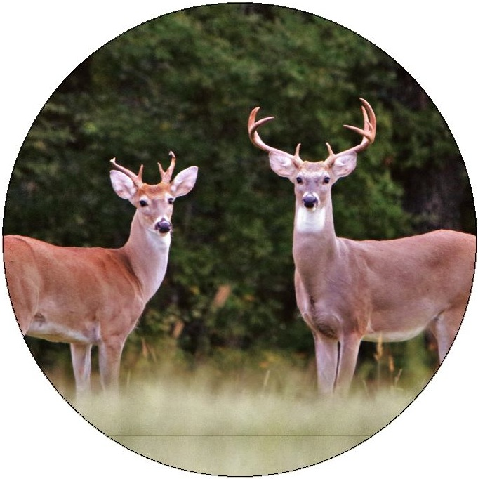 Deer Pinback Buttons and Stickers