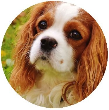Dog Photo Pinback Buttons and Stickers