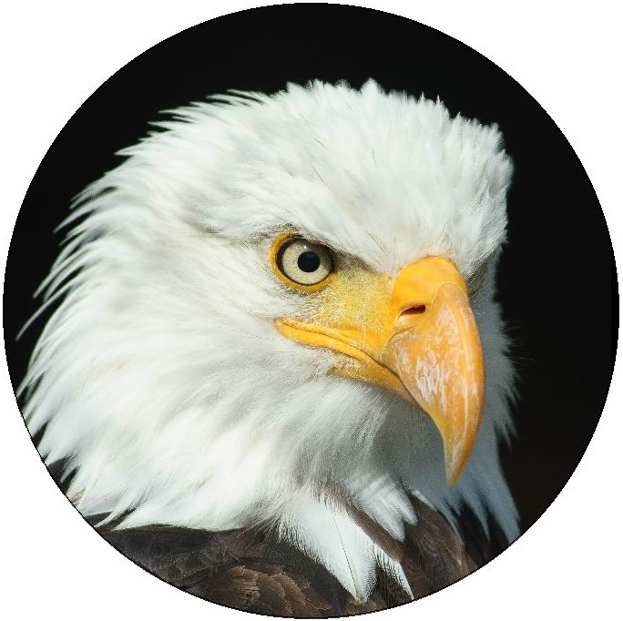 Eagle Pinback Buttons and Stickers
