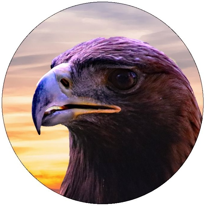 Eagle and Hawk Pinback Buttons and Stickers