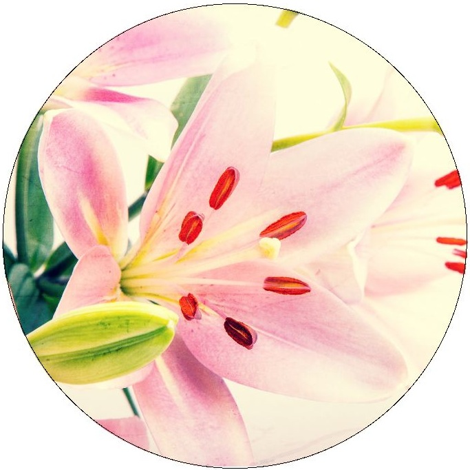 Flower Pinback Buttons and Stickers