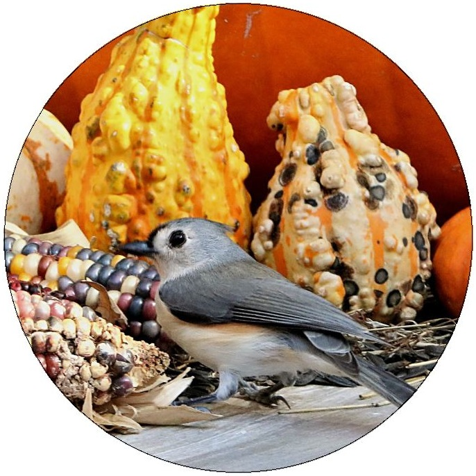 Bird, Squash and Pumkin Pinback Buttons and Stickers