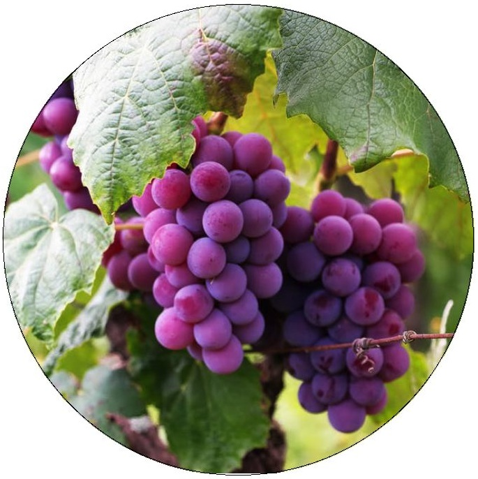 Grapes Pinback Buttons and Stickers