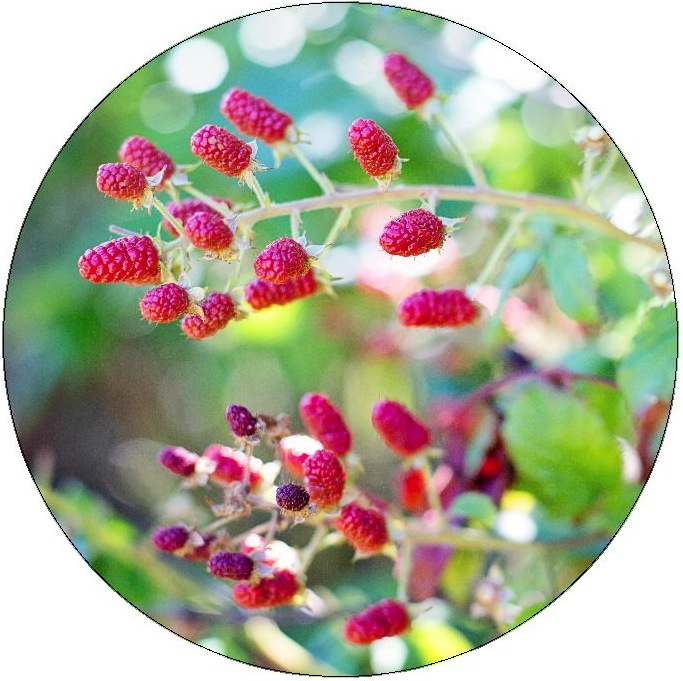 Raspberries Pinback Buttons and Stickers