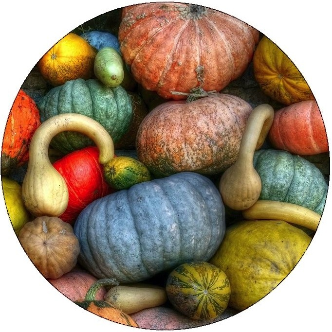 Squash and Pumkin Pinback Buttons and Stickers