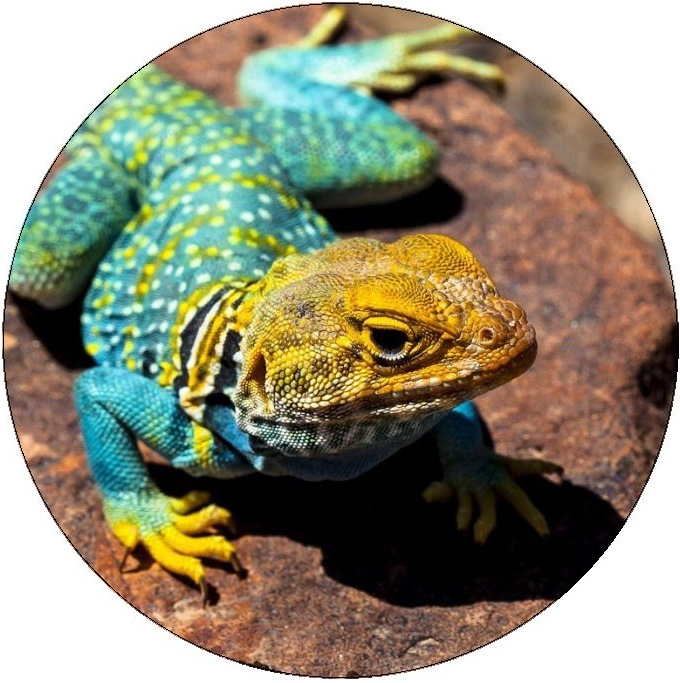Lizard Pinback Buttons and Stickers
