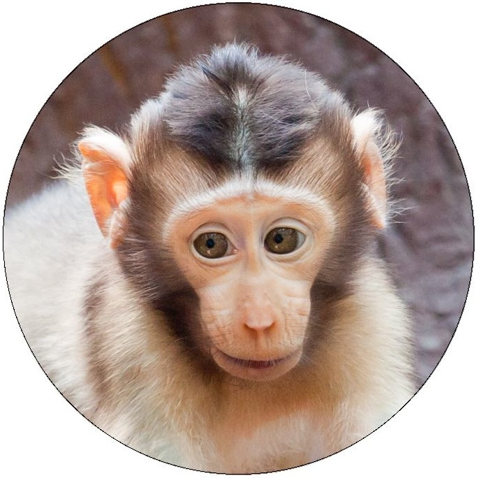 Monkey Photo Pinback Button and Stickers