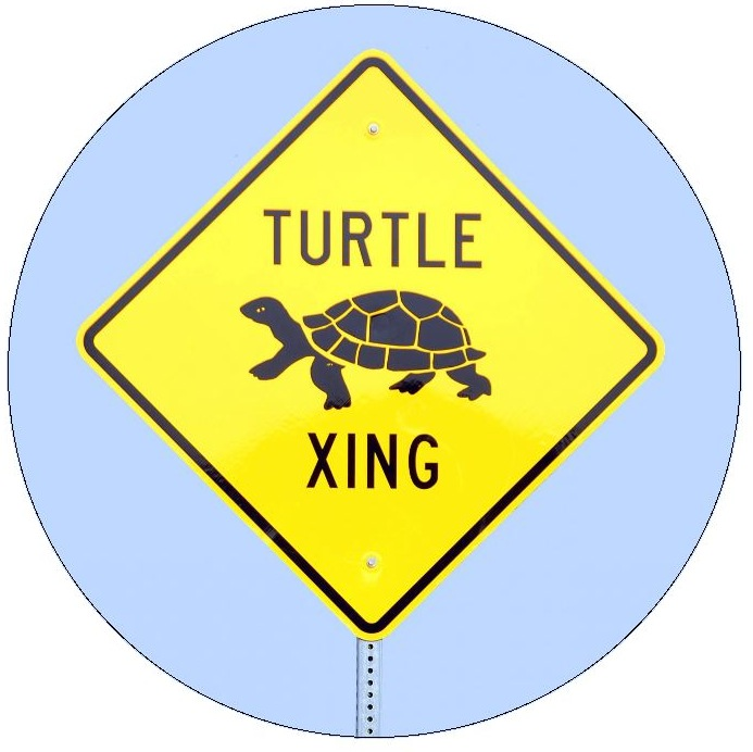 Turtle Crossing Pinback Buttons and Stickers
