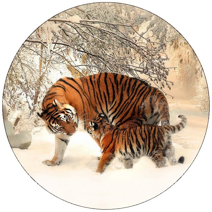 Tiger Pinback Buttons and Stickers