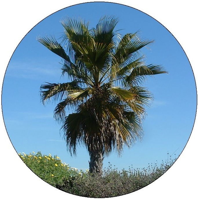 Palm Trees Pinback Buttons and Stickers
