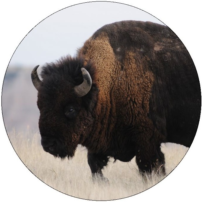 Buffalo Pinback Buttons and Stickers