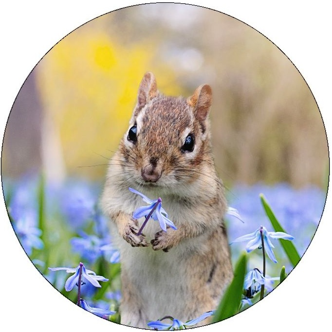 Chipmunk Pinback Buttons and Stickers