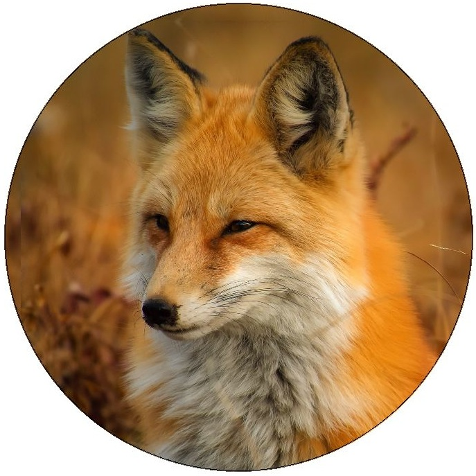Foxes Pinback Buttons and Stickers