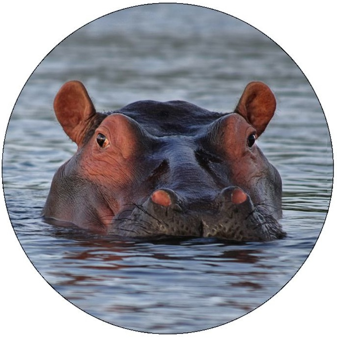 Hippopotamus Pinback Buttons and Stickers