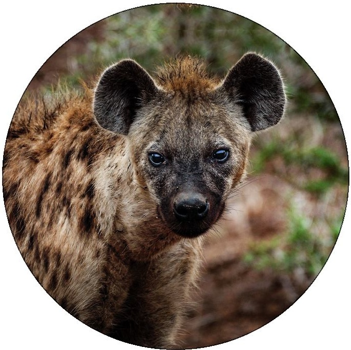 Hyena Pinback Buttons and Stickers