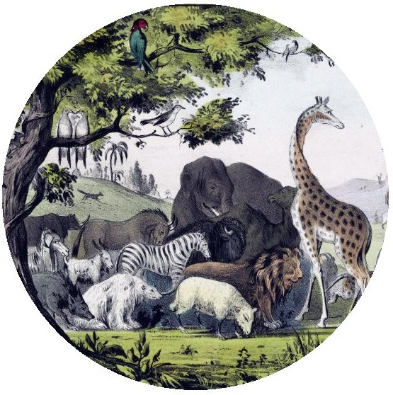 Wildlife Pinback Buttons and Stickers