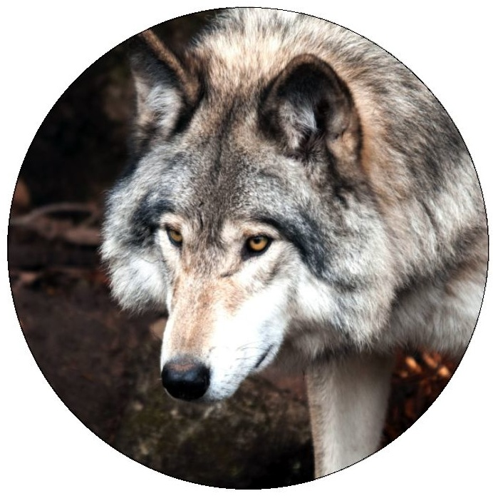 Wolf Pinback Buttons and Stickers