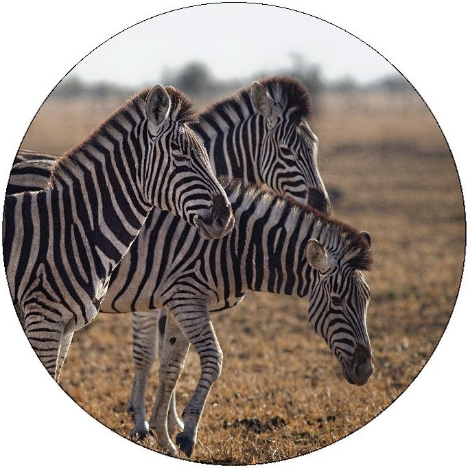 Zebra Pinback Buttons and Stickers